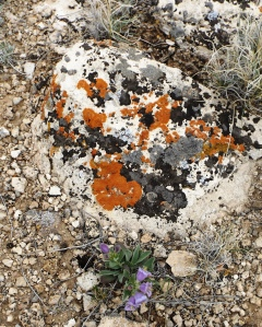 Jackson Pollock's Muse, Horseshoe Bend National Rec Area, Mile 2405