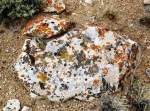 Pollock w Weeds