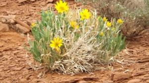 post rain yellow wild fleur