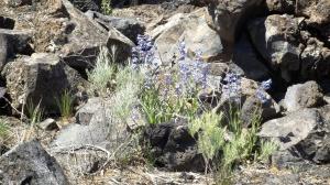 blue lava fleurs