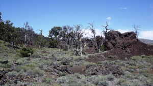 landscape w cone chunks