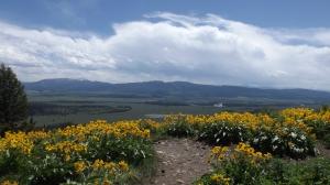 teton fleurs field