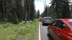 Traffic Jam & Bear Baiters