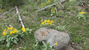 yellow fleurs and rock