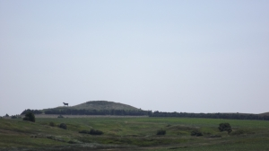 Distant Holsein