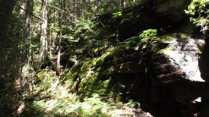 sun shade moss cedar creek