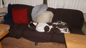 The Guard Dog:  Fast Asleep at 11:30 P.M.