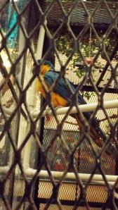 Posta Blue Bird