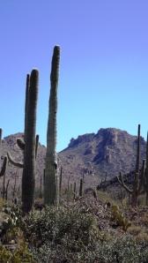 Saguaro NP Skyline