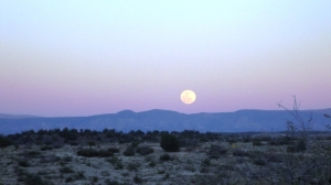 Later Full Moon Over Cottonwood