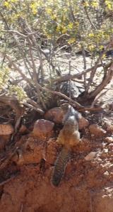 Secretariat Squirrel