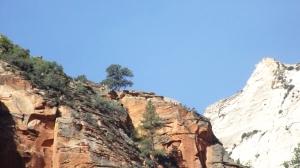 A Prime Clifftop Ponderosa Pine