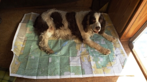 Pink Doesn't Want Us to Plan a Path to Capitol Reef:  She Likes It HERE.