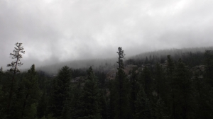 More Fog and Rain