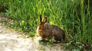 A Curious Rabbit
