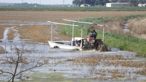 Another Way to Harvest Crawfish