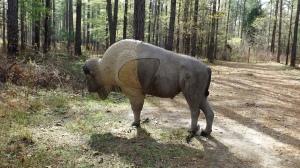 Georgia Bison