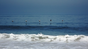 Pelicans in Recreational Flight