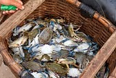 A Hamper of Blue Crabs