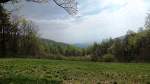 Another Shenandoah Overlook View