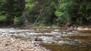 Another View of Shavers Fork