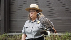 Ranger Mara and a Red-tailed Hawk
