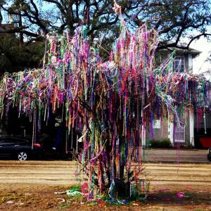 A tree that blooms this time of year in New Orleans