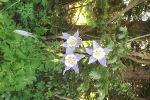 Bluestar Fleurs St Vrain Creek