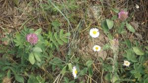 Two Fleurs w Rock